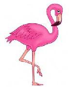 pic_flamingo